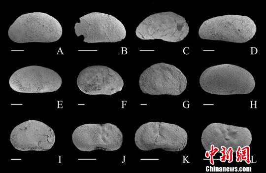 图为本次研究的介形虫化石。南古所供图