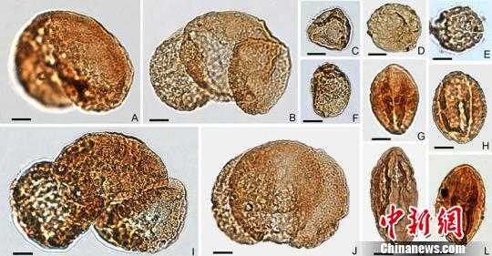 图为本次研究的孢粉化石。南古所供图