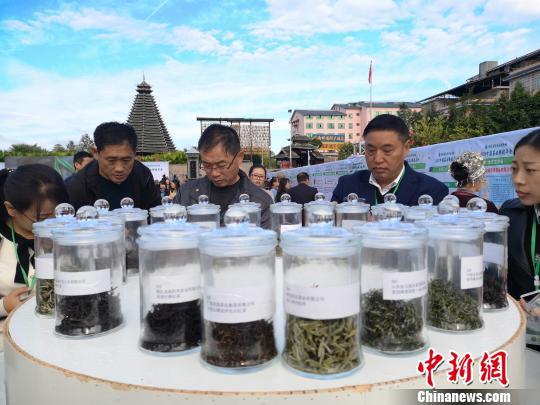 11月8日,2018中国茶业科技年会在广西柳州市三江侗族自治县拉开序幕。 林馨 摄